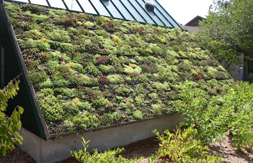 Green Roof Construction How To Make A Green Roof