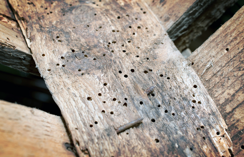 Treating Woodworm - Getting Rid of Wood Boring Insect