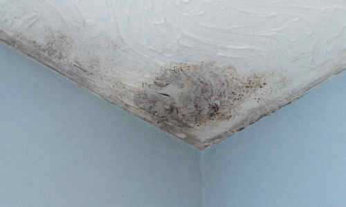 Spotting Condensation - damp & peeling wallpaper