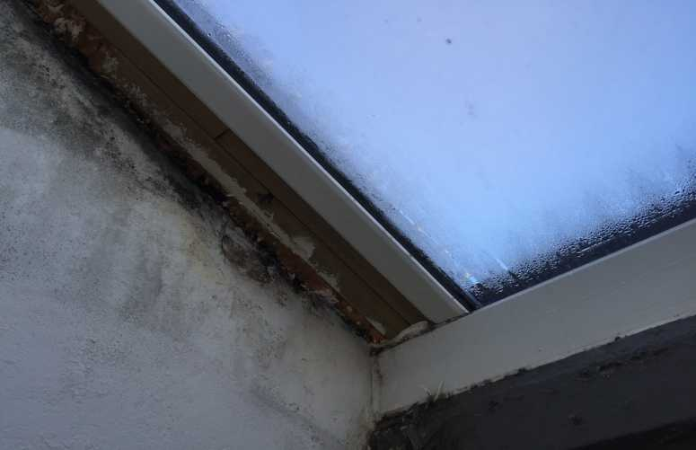 condensation and black mould