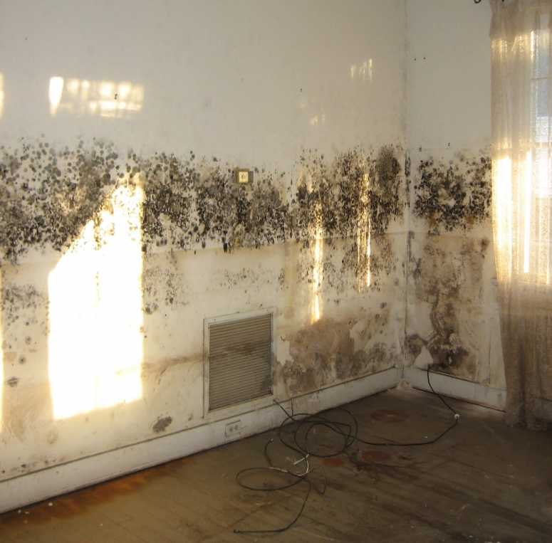 Mould on interior walls