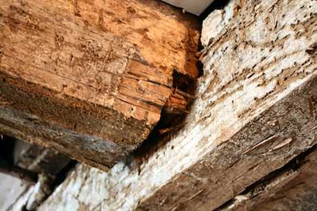 woodworm in timber structure