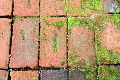 removing algae from paving