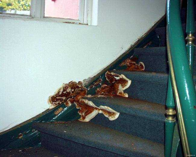 dry rot on stairs