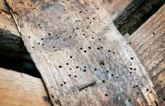 Treating Woodworm