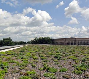 Read More About Green Roof Maintenance - A Complete Guide