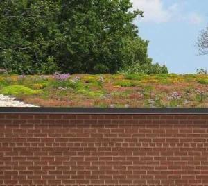 Read More About Introducing Green Roofs - Everything you need to know to get started