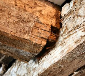 Read More About A Complete Guide to Treating Woodworm
