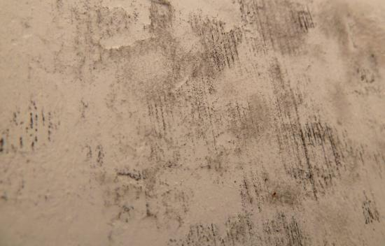 Read More About Black Mould - FAQS