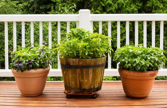 Read More About How to Treat Decking