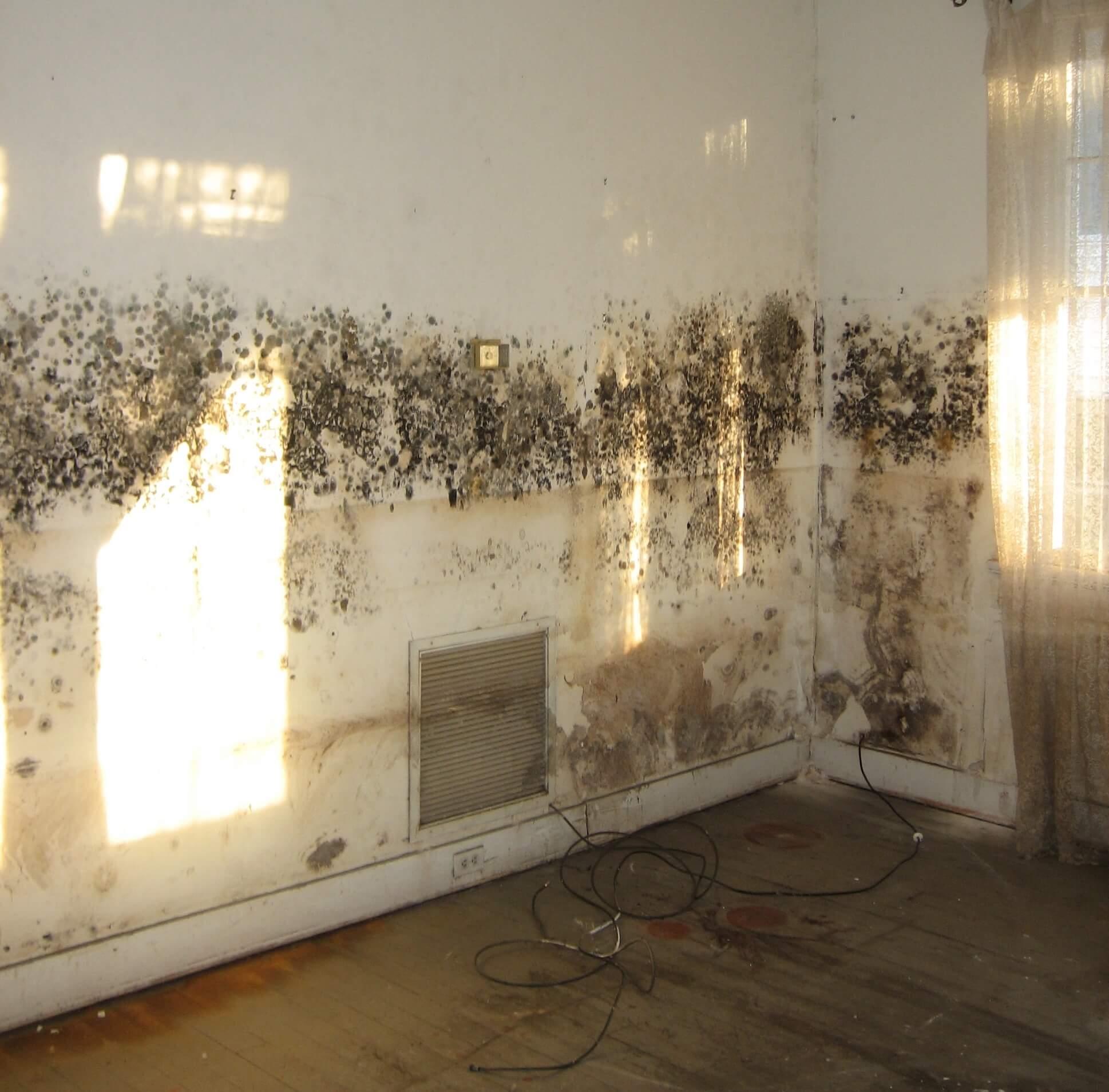 Mould on interior walls