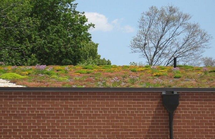 wildflowers on roof